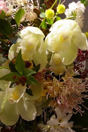 600ad6858f73 アレンジ・切り花・山野草・草もの盆栽:ププラモス